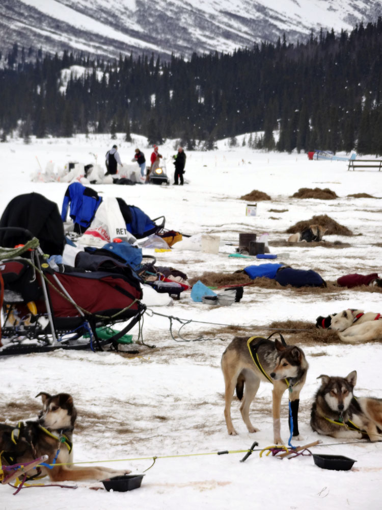 Fly with Trygg Air and follow the world-famous Iditarod race